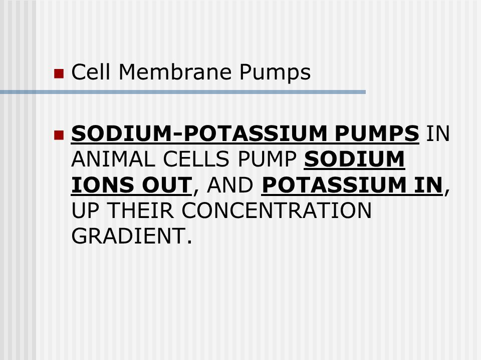 Cell Membrane Pumps SODIUM-POTASSIUM PUMPS IN ANIMAL CELLS PUMP SODIUM IONS OUT, AND POTASSIUM IN, UP THEIR CONCENTRATION GRADIENT.