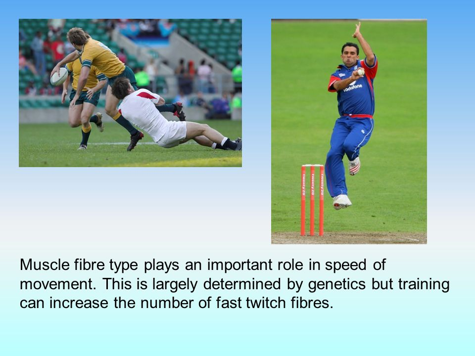 Muscle fibre type plays an important role in speed of movement.