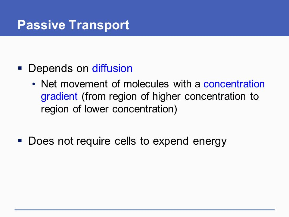 Passive Transport  Depends on diffusion Net movement of molecules with a concentration gradient (from region of higher concentration to region of lower concentration)  Does not require cells to expend energy