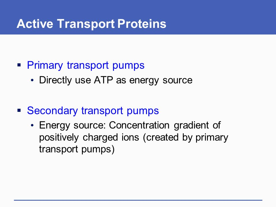 Active Transport Proteins  Primary transport pumps Directly use ATP as energy source  Secondary transport pumps Energy source: Concentration gradient of positively charged ions (created by primary transport pumps)