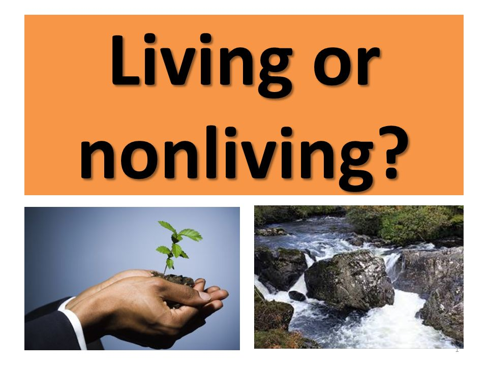 What is divided into two major categories; living and nonliving?