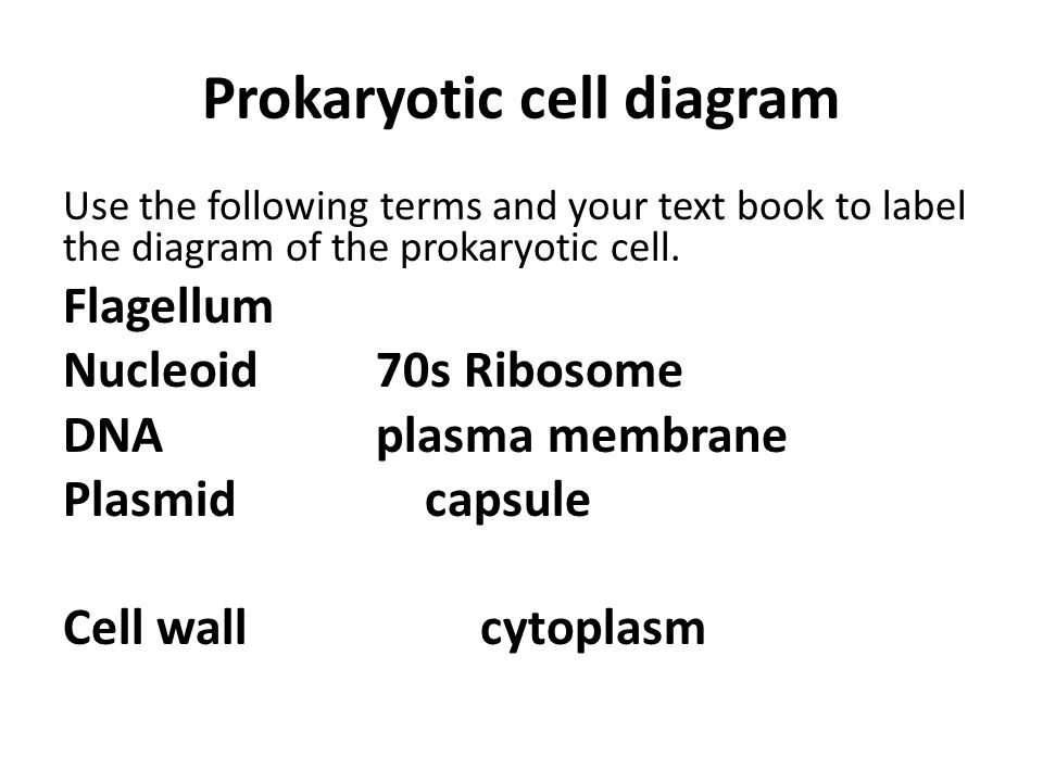 Prokaryotic cell diagram Use the following terms and your text book to label the diagram of the prokaryotic cell.