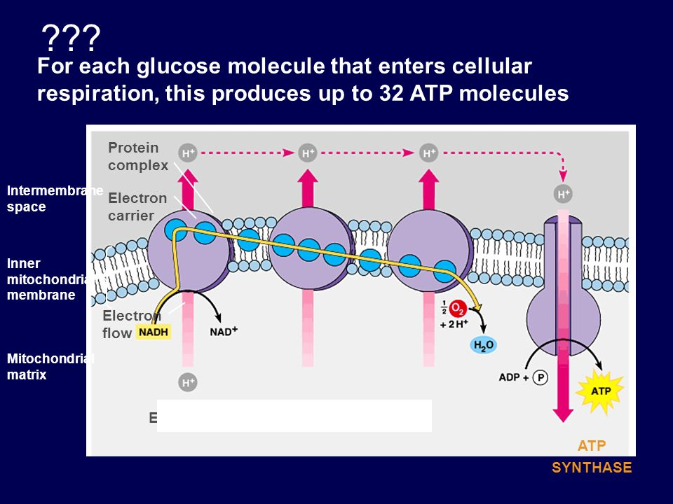 . Occurs in Cytoplasm Steps 1-3- A glucose molecule is energized, using ATP.