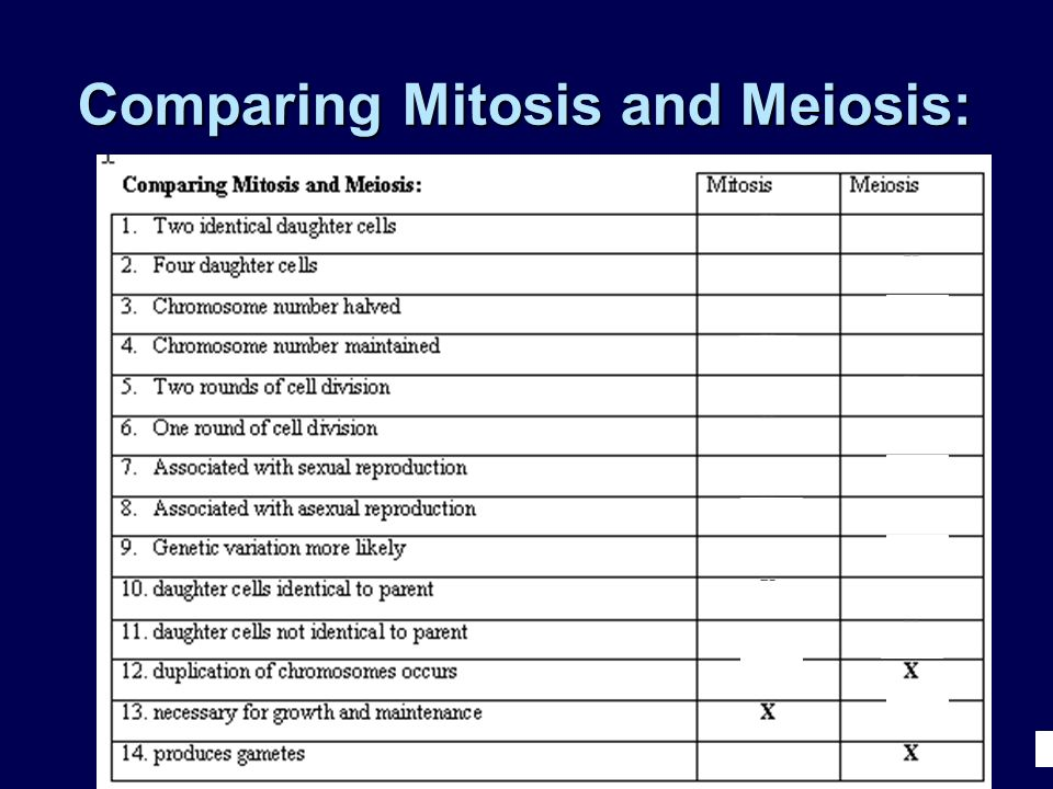 Comparing Mitosis and Meiosis: