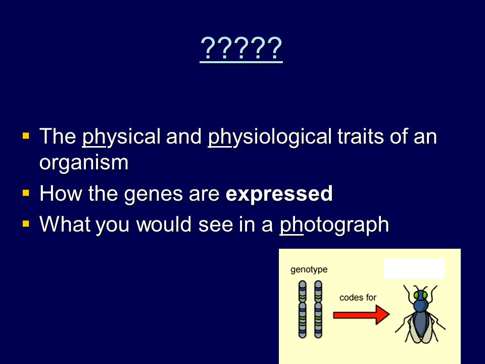 Genotype  The genetic makeup of an organism – . : having two of the same allele BB bb – .