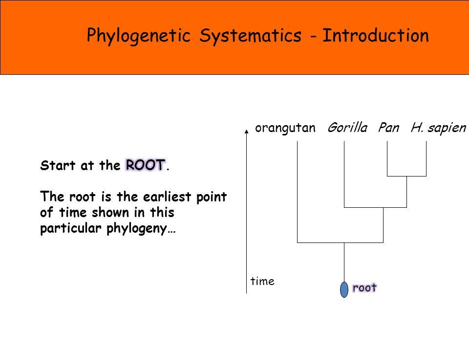 orangutan Gorilla Pan H. sapien time Phylogenetic Systematics - Introduction