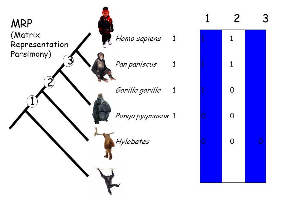 Homo sapiens11 1 Pan paniscus 1 1 1 Gorilla gorilla 1 1 0 Pongo pygmaeus1 0 0 Hylobates 0 0 0 123123 1 2 3 MRP (Matrix Representation Parsimony)