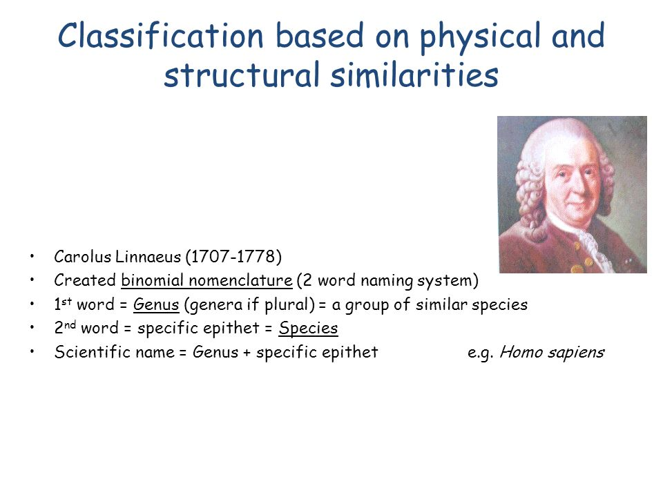 Classification based on physical and structural similarities Carolus Linnaeus (1707-1778) Created binomial nomenclature (2 word naming system) 1 st word = Genus (genera if plural) = a group of similar species 2 nd word = specific epithet = Species Scientific name = Genus + specific epithet e.g.