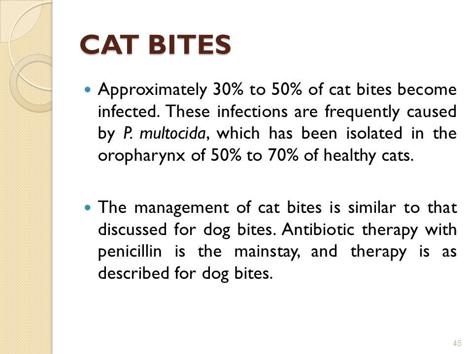 Oropharynx Cat CAT BITES Approximately 30  to