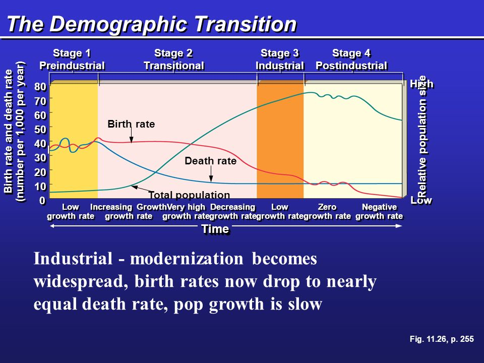 The Demographic Transition Low High Relative population size Birth rate and death rate (number per 1,000 per year) Birth rate and death rate (number per 1,000 per year) Stage 1 Preindustrial Stage 1 Preindustrial Stage 2 Transitional Stage 2 Transitional Stage 3 Industrial Stage 3 Industrial Stage 4 Postindustrial Stage 4 Postindustrial Low growth rate Low growth rate Increasing Growth growth rate Increasing Growth growth rate Very high growth rate Very high growth rate Decreasing growth rate Decreasing growth rate Low growth rate Low growth rate Zero growth rate Zero growth rate Negative growth rate Negative growth rate Birth rate Total population Death rate TimeTime Fig.