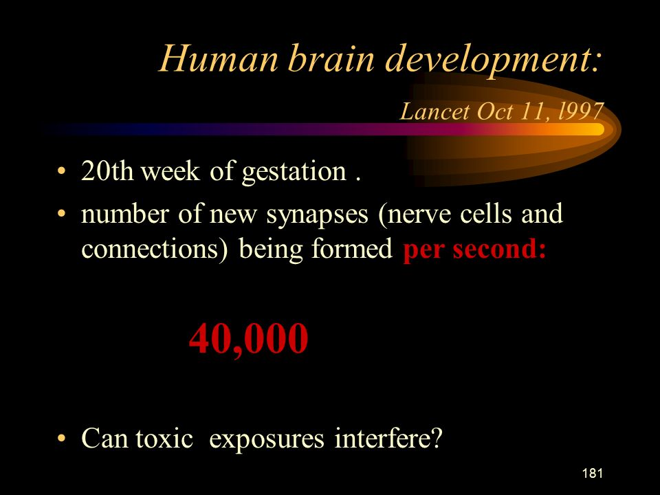 181 Human brain development: Lancet Oct 11, l997 20th week of gestation.