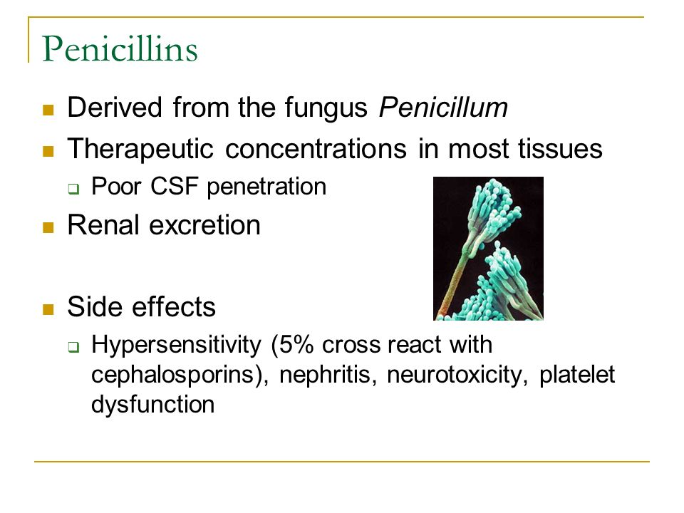 Augmentin tissue penetration