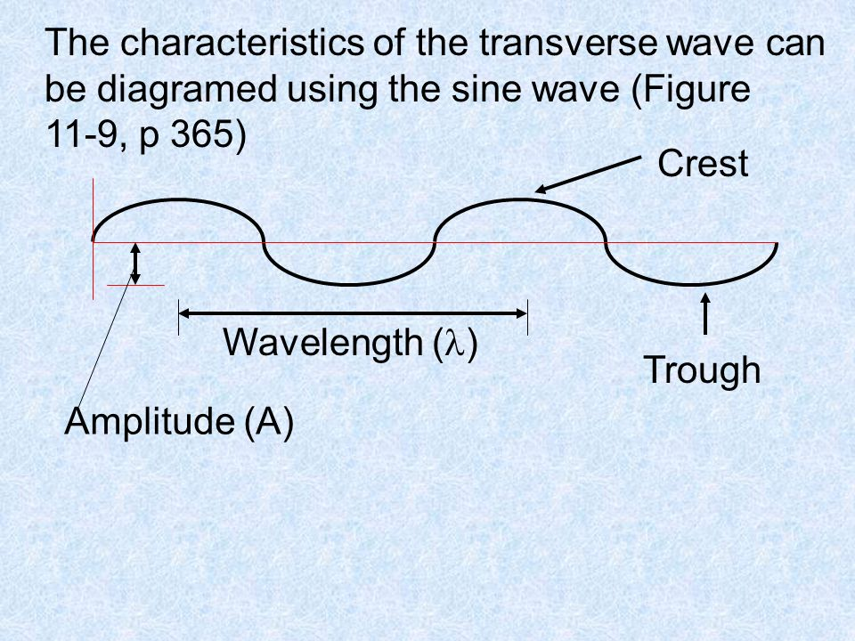 The characteristics of the transverse wave can be diagramed using the sine wave (Figure 11-9, p 365) Crest Trough Wavelength ( ) Amplitude (A)