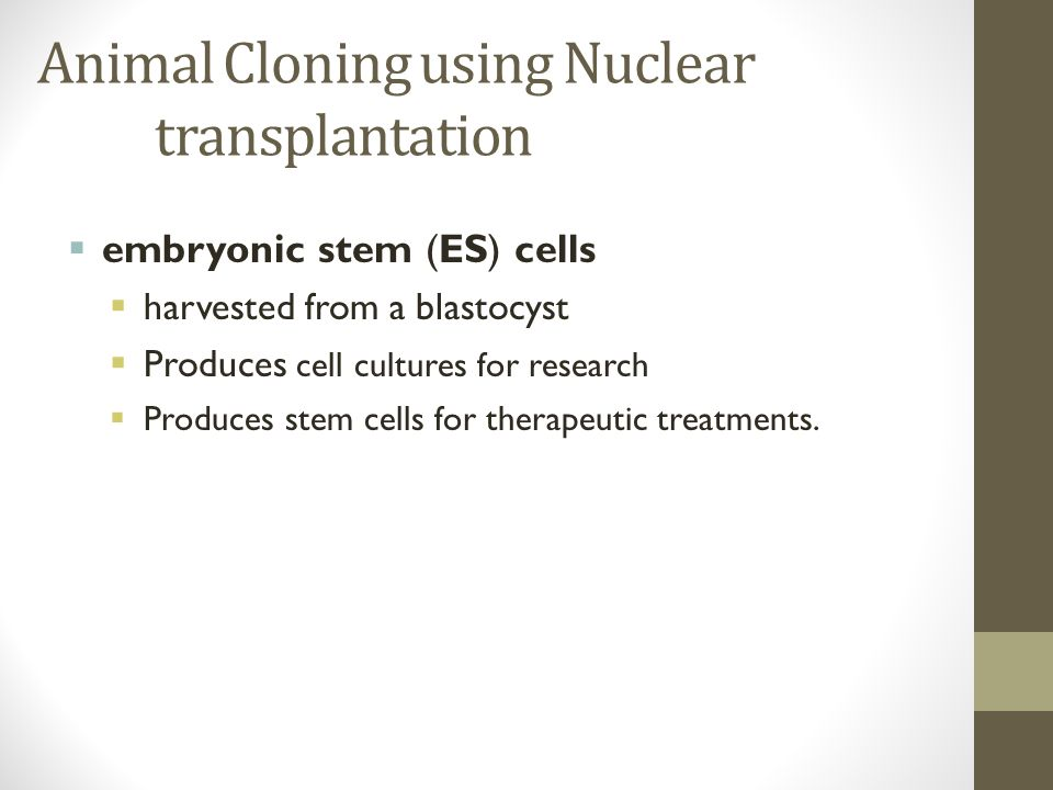 Animal Cloning using Nuclear transplantation  embryonic stem (ES) cells  harvested from a blastocyst  Produces cell cultures for research  Produces stem cells for therapeutic treatments.
