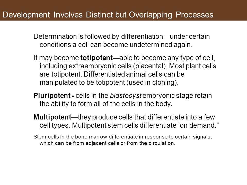 Determination is followed by differentiation—under certain conditions a cell can become undetermined again.