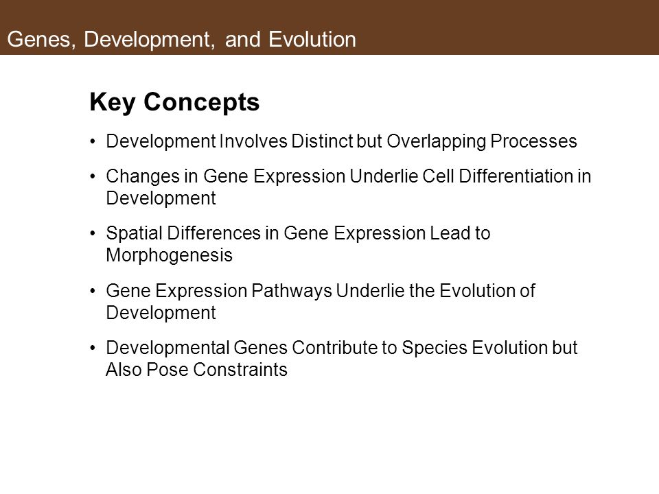 Genes, Development, and Evolution Key Concepts Development Involves Distinct but Overlapping Processes Changes in Gene Expression Underlie Cell Differentiation in Development Spatial Differences in Gene Expression Lead to Morphogenesis Gene Expression Pathways Underlie the Evolution of Development Developmental Genes Contribute to Species Evolution but Also Pose Constraints