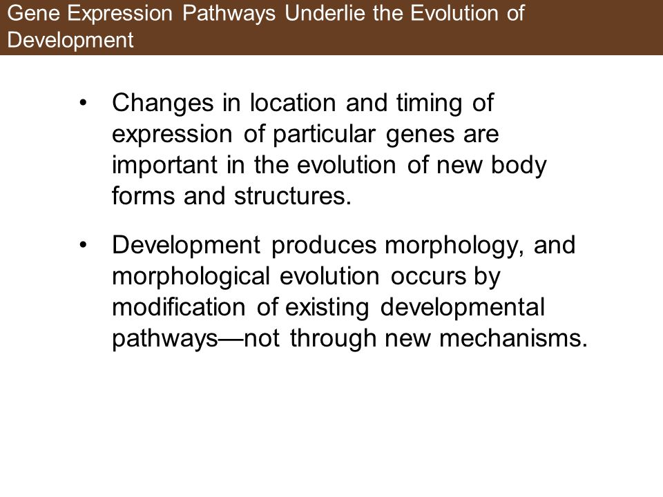 Gene Expression Pathways Underlie the Evolution of Development Changes in location and timing of expression of particular genes are important in the evolution of new body forms and structures.