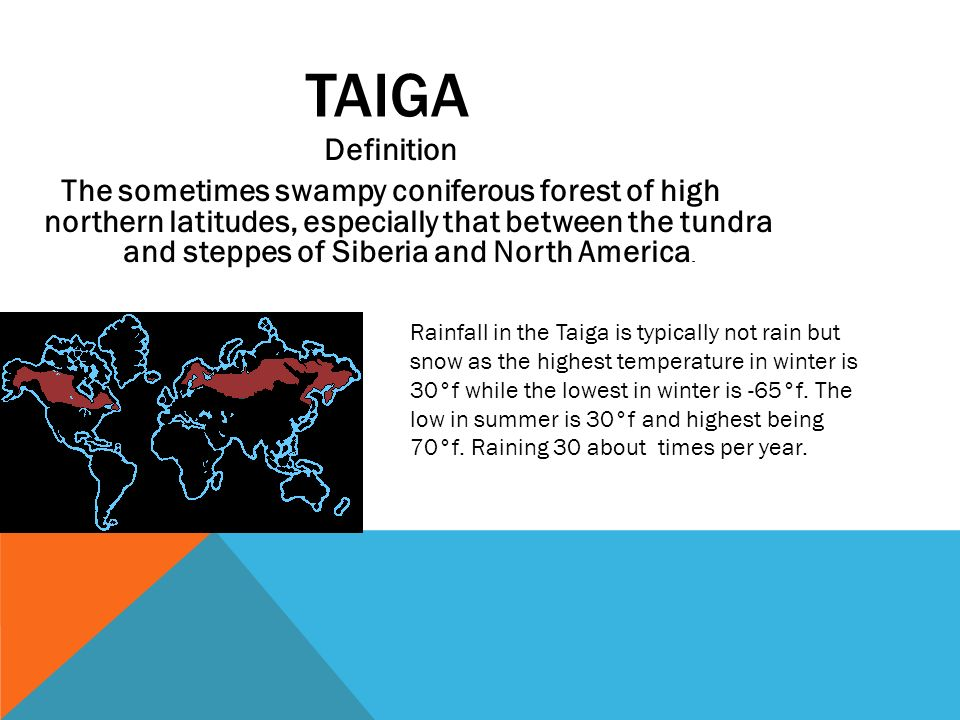 TAIGA Definition The sometimes swampy coniferous forest of high northern latitudes, especially that between the tundra and steppes of Siberia and North America.