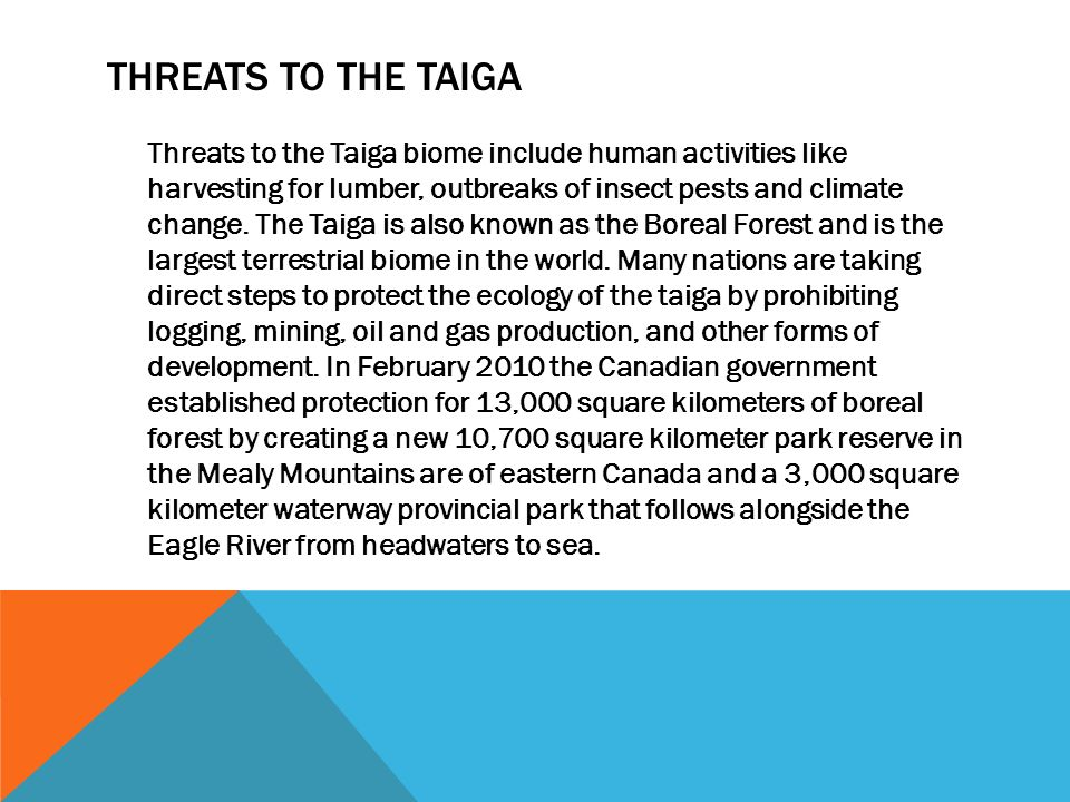THREATS TO THE TAIGA Threats to the Taiga biome include human activities like harvesting for lumber, outbreaks of insect pests and climate change.