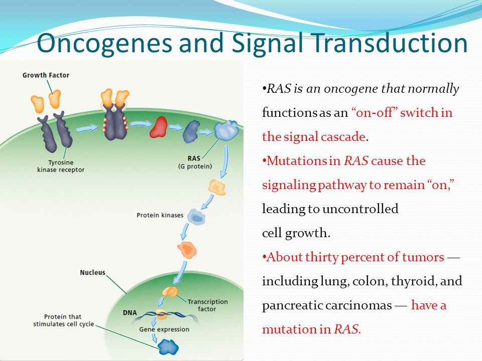 Oncogenes and Signal Transduction RAS is an oncogene that normally functions as an on-off switch in the signal cascade.