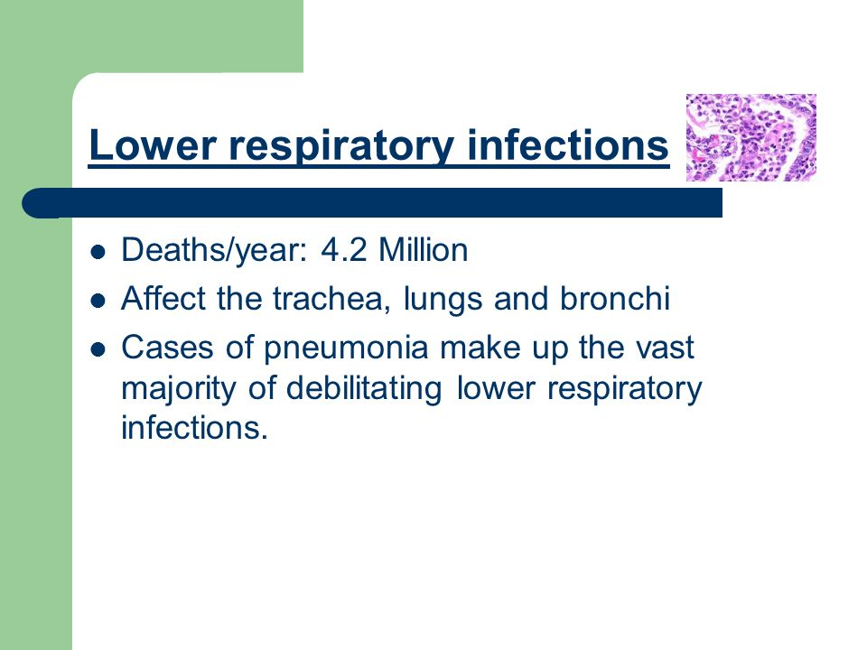 Lower respiratory infections Deaths/year: 4.2 Million Affect the trachea, lungs and bronchi Cases of pneumonia make up the vast majority of debilitating lower respiratory infections.