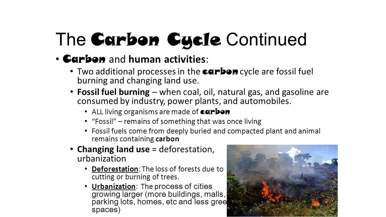 deforestation oxygen and carbon dioxide escapes