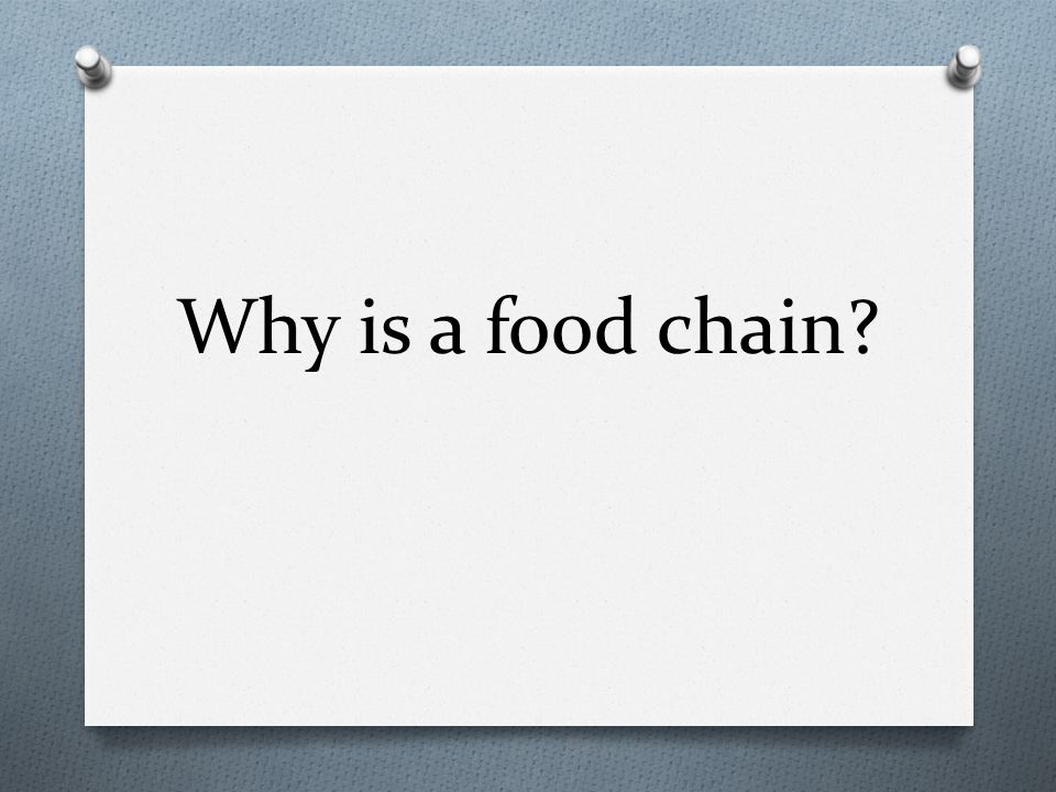 Why is a food chain