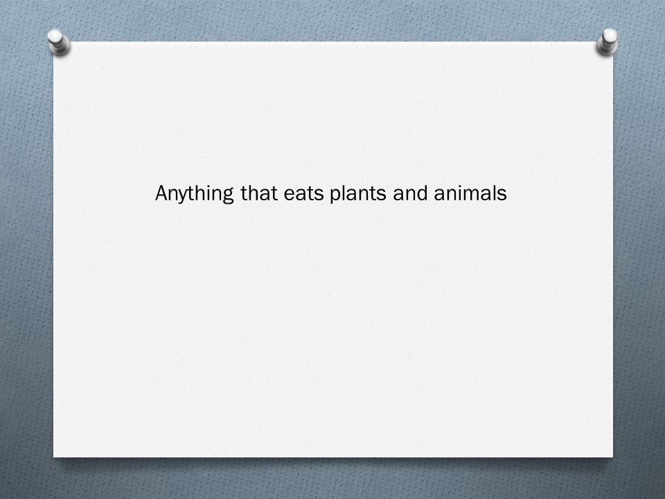 Anything that eats plants and animals