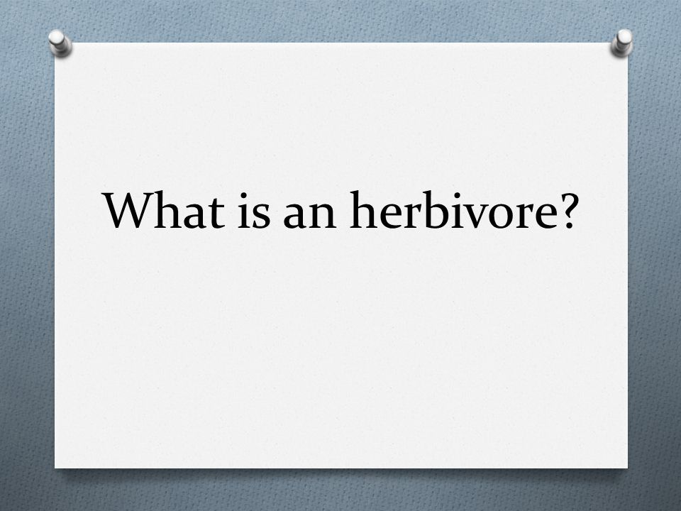 What is an herbivore