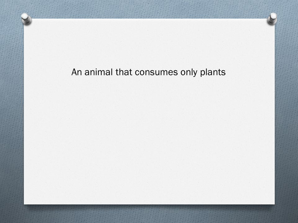 An animal that consumes only plants