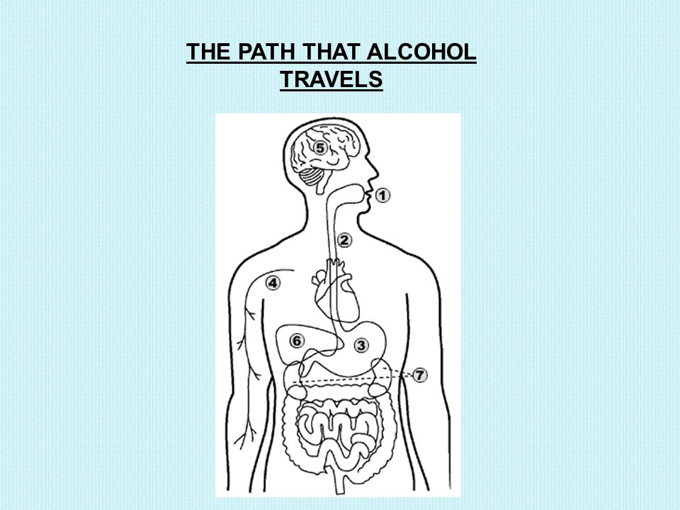 THE PATH THAT ALCOHOL TRAVELS
