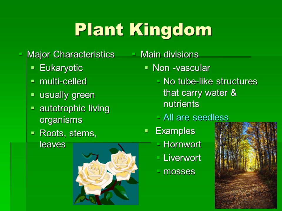 Plant Kingdom  Major Characteristics  Eukaryotic  multi ...