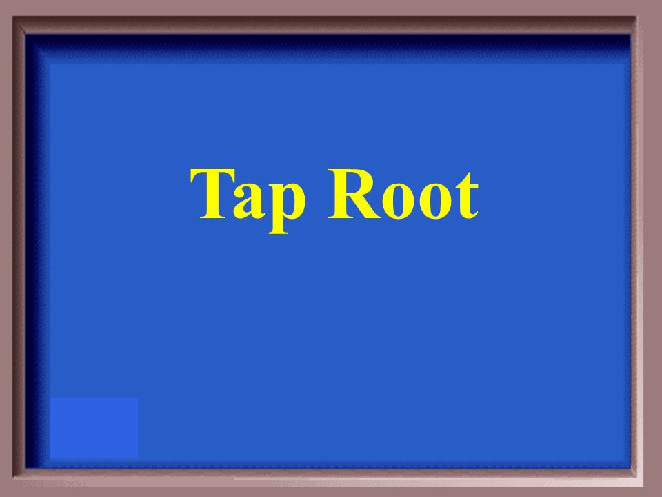 What type of root has a central, fleshy root that grows deeper than the rest