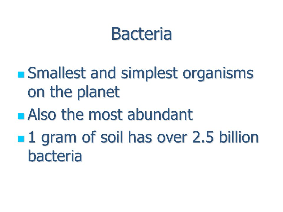 Bacteria Smallest and simplest organisms on the planet Smallest ...