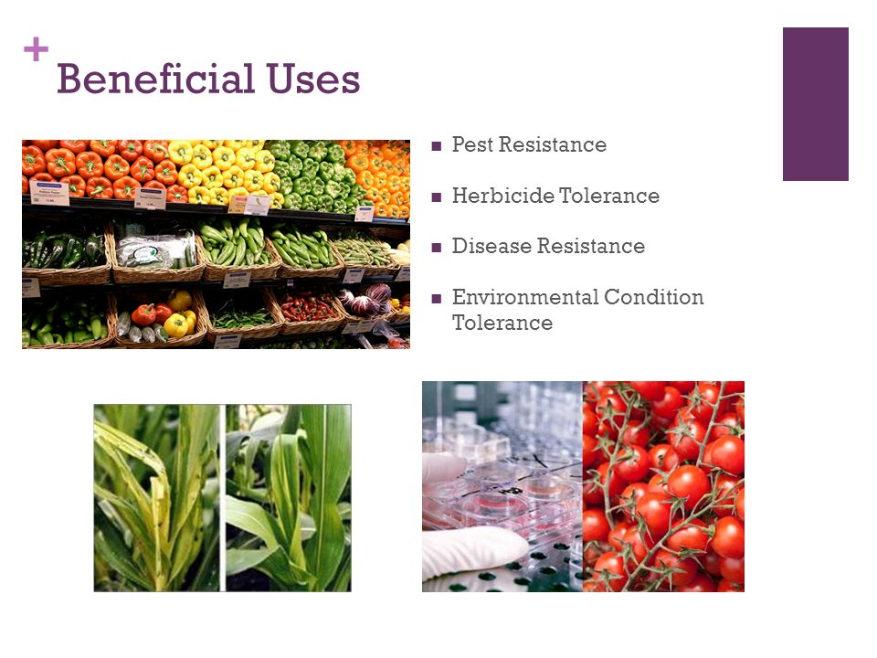 + Beneficial Uses Pest Resistance Herbicide Tolerance Disease Resistance Environmental Condition Tolerance