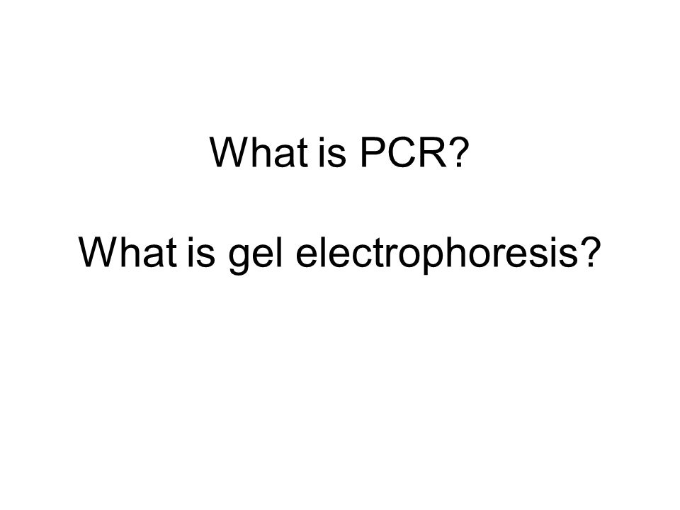 What is PCR What is gel electrophoresis