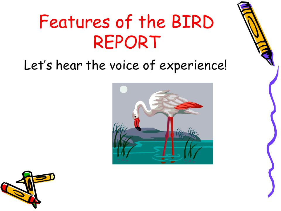 Features of the BIRD REPORT Let's hear the voice of experience!