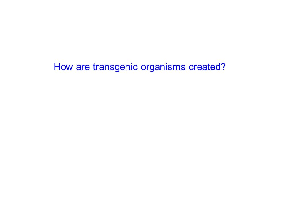 How are transgenic organisms created