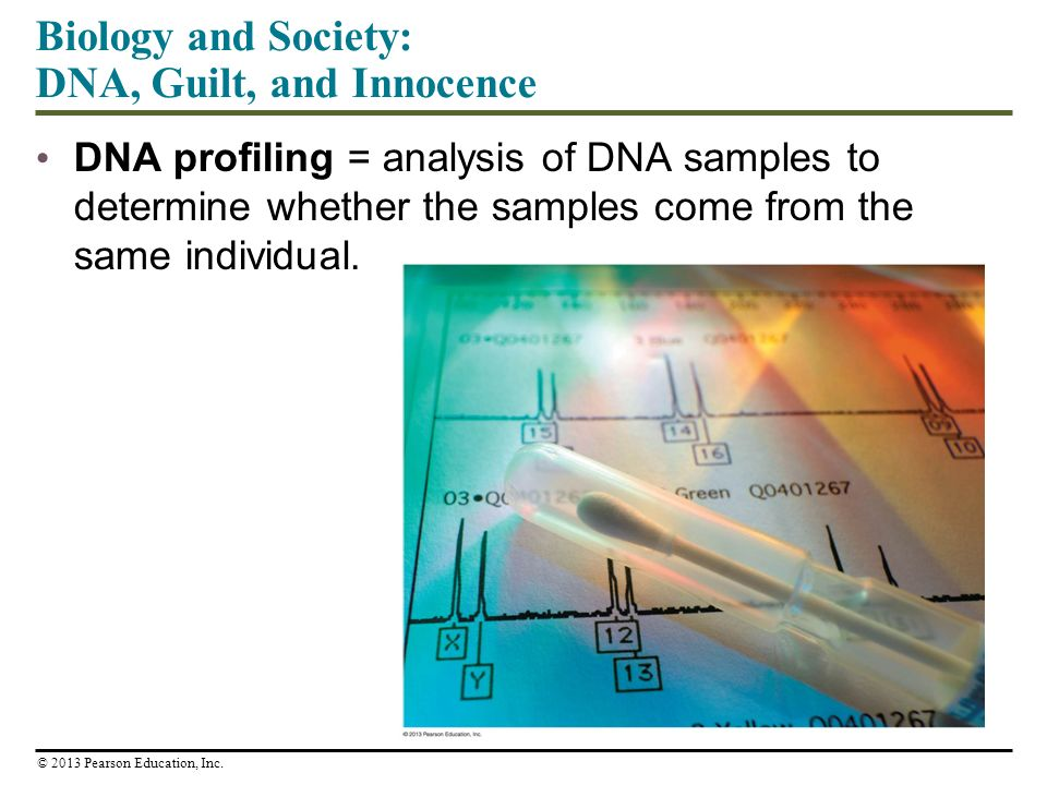 Biology and Society: DNA, Guilt, and Innocence DNA profiling = analysis of DNA samples to determine whether the samples come from the same individual.