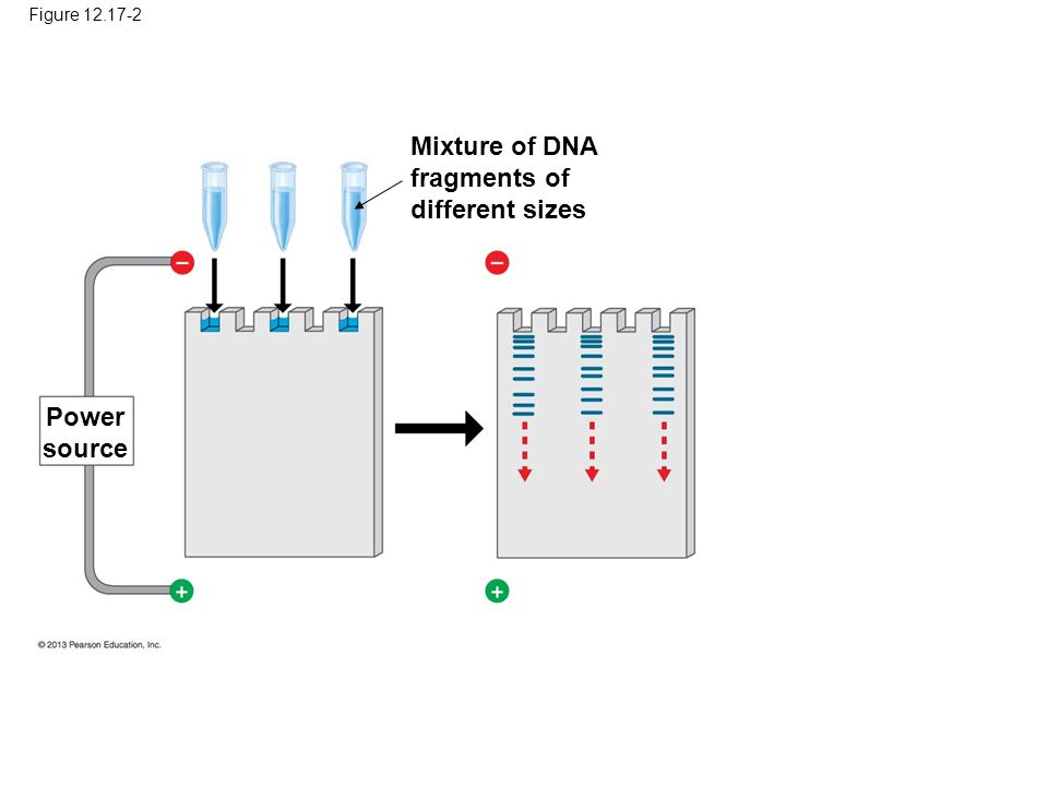 Figure Mixture of DNA fragments of different sizes Power source