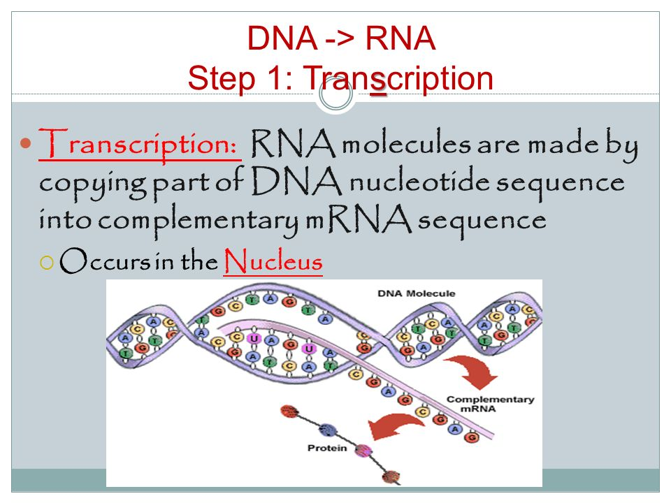 deoxyribonucleic acid essay The complementary structure of deoxyribonucleic acid 81 structure, crystalline or fibrous, so far determined moreover, the number of x-ray reflexions is small, as there are few reflexions at spacings less than 3& and so the.