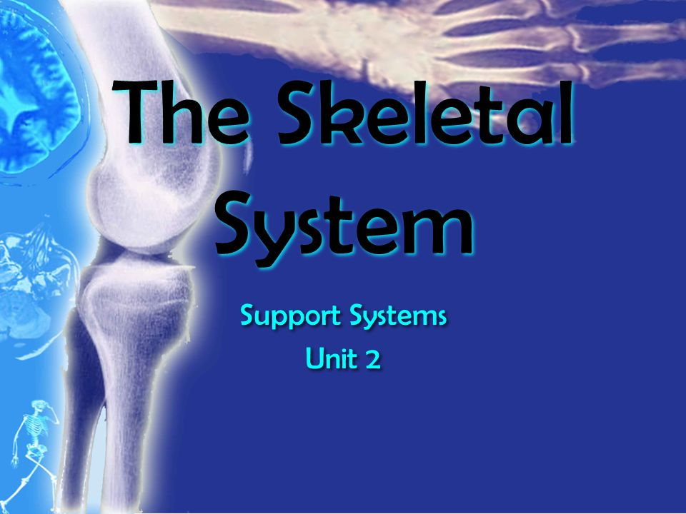 The Skeletal System Support Systems Unit 2 Support Systems Unit 2