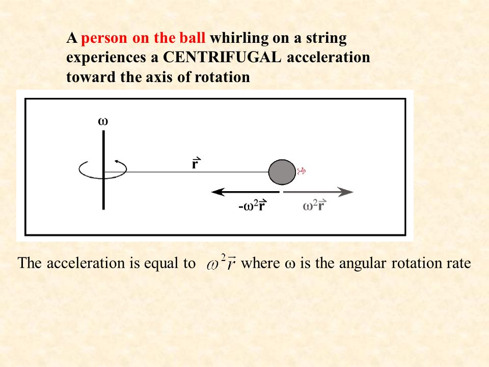 A person on the ball whirling on a string experiences a CENTRIFUGAL acceleration toward the axis of rotation The acceleration is equal to where  is the angular rotation rate
