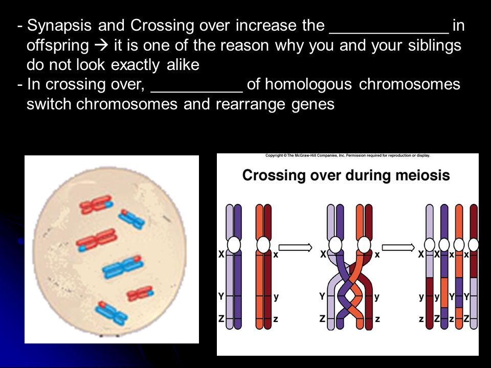 - Synapsis and Crossing over increase the _____________ in offspring  it is one of the reason why you and your siblings do not look exactly alike - In crossing over, __________ of homologous chromosomes switch chromosomes and rearrange genes