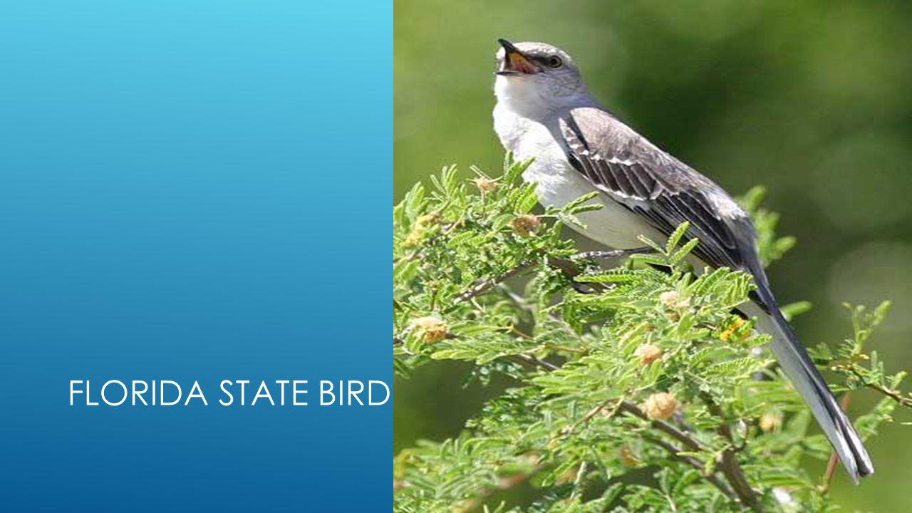 Florida state symbols by alex florida state flag ppt download 6 florida state bird buycottarizona