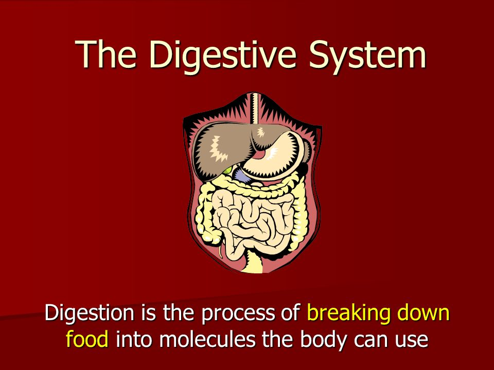 The Digestive System Digestion is the process of breaking down food into molecules the body can use