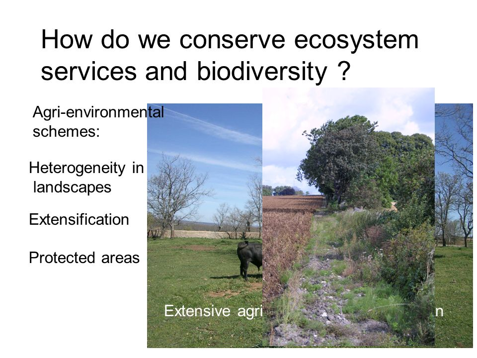 Extensive agriculture, Dehesas in Spain How do we conserve ecosystem services and biodiversity .