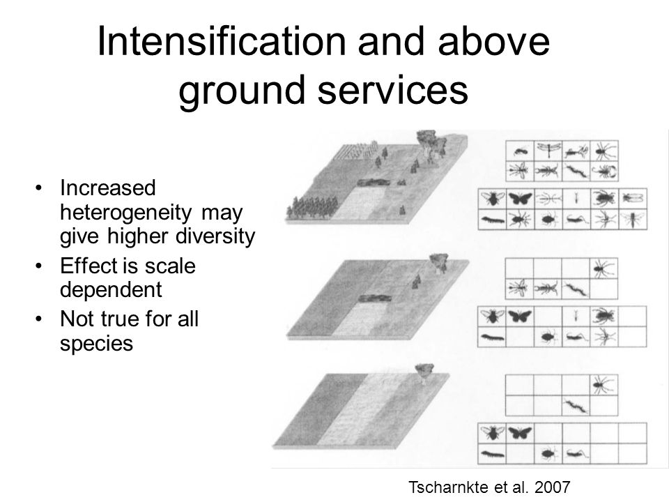 Intensification and above ground services Increased heterogeneity may give higher diversity Effect is scale dependent Not true for all species Tscharnkte et al.
