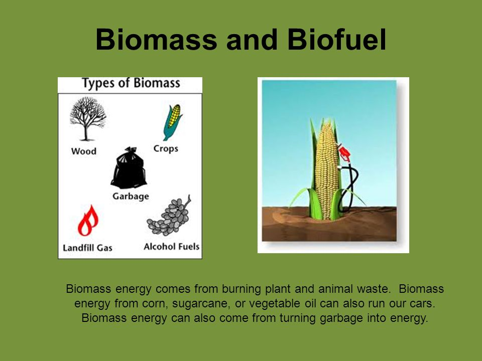 Biomass and Biofuel Biomass energy comes from burning plant and animal waste.