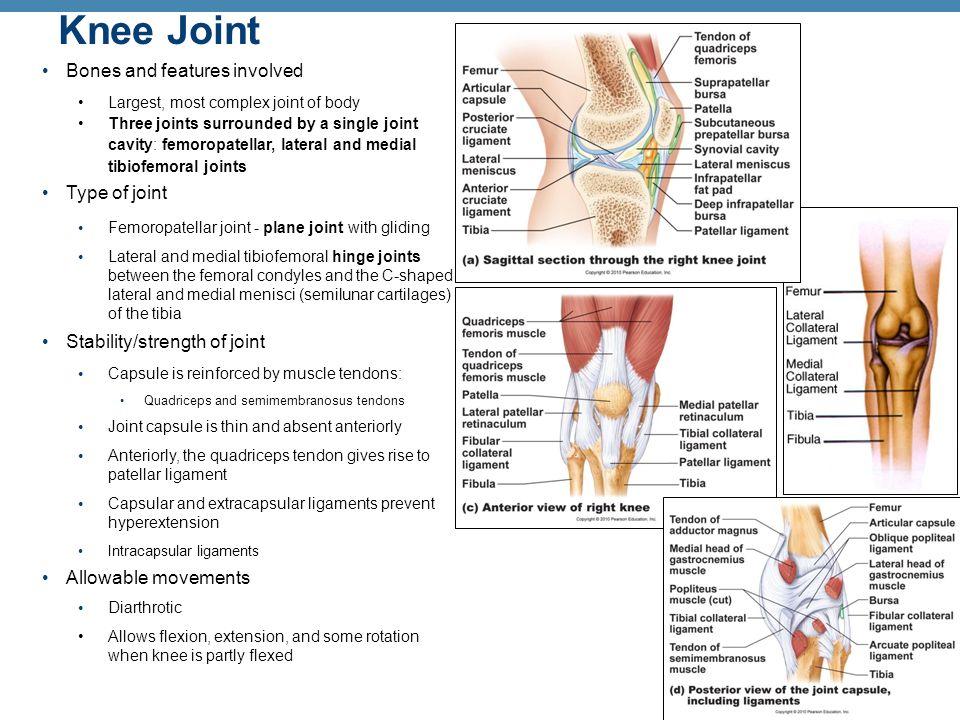 Femoropatellar Joint